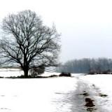 Tiiu Heeringson-Vinterstigen