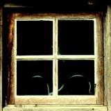 Tiiu Heeringson-Fönsterblomman