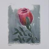 kickie-hogstrom-den-rosa-blomman