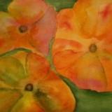 Eha Arg-Oranga blommor