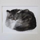 kickie-hogstrom-katt-9