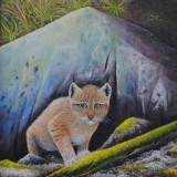 goran-gustavsson-lodjursunge-kid-lynx
